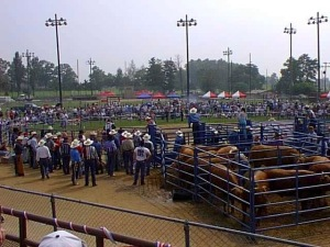 View of Korean-American Cowboy Association rodeo